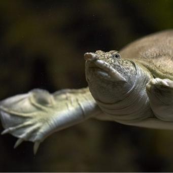 Рыбки и красноухая черепаха можно ли