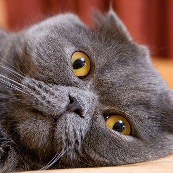 Наросты на глазах у котов