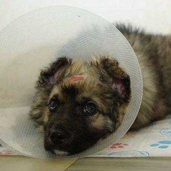 Защитный воротник для собак