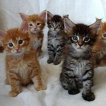 Французские имена котов