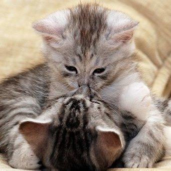 Как предотвратить беременность кошки