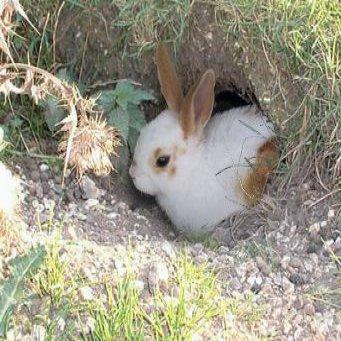 норы для кроликов