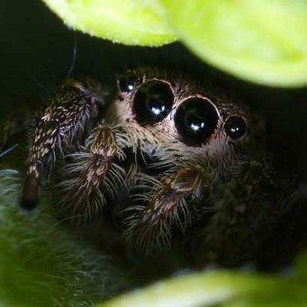 пауки виды и фото