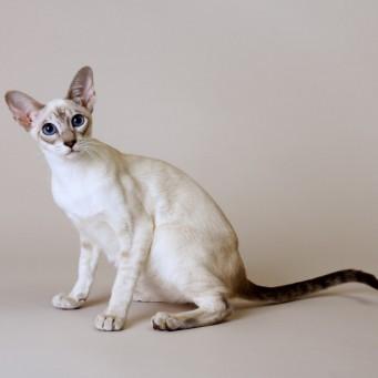 У кота в моче белок повышен