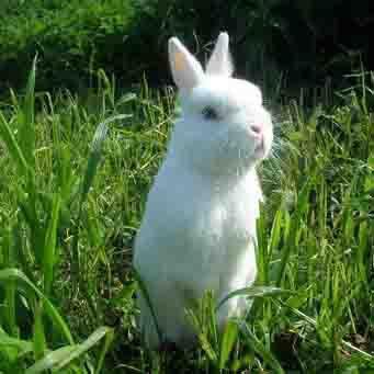 Корма для кроликов своими руками состав фото 433