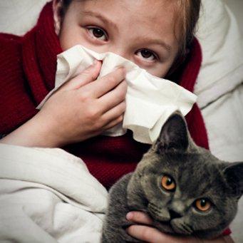 аллергия на кота как проявляется у взрослых
