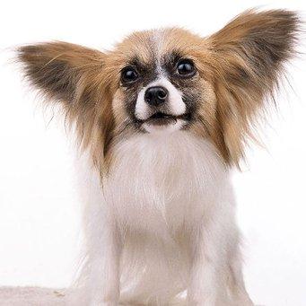 как называется маленькая собака