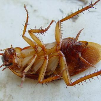 откуда появляются паразиты в организме человека