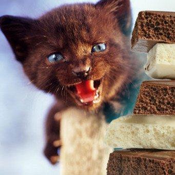кожная аллергия на кошек