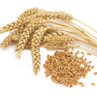 пшеница фуражная 5 класс