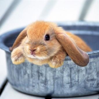 Кролики зимой: как поить кроликов зимой?