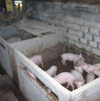 Загоны для свиней своими руками 657