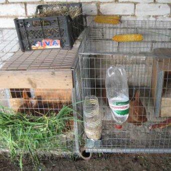 Маточники для кроликов своими руками видео 31