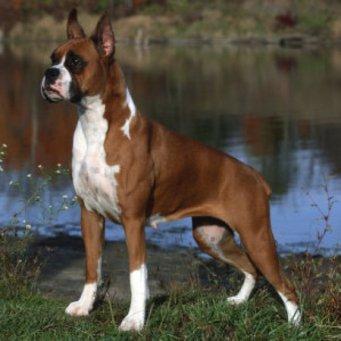средние собаки породы фото и названия