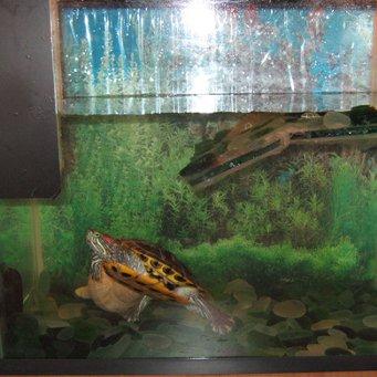 Для аквариума красноухой черепахи