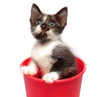 собак. Счастливым обладателям кошек ...
