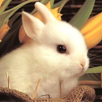 Покупка декоративных кроликов, как купить кролика Декоративные Кролики Уход