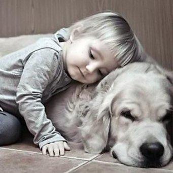 Как собаки излечивают от аутизма. D87c1a982615b8a83193e7fdbf9d0aa6