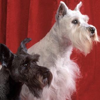 Почему у собаки сухой горячий нос?
