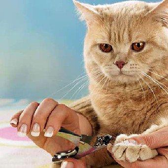 как часто давать коту таблетки от глистов