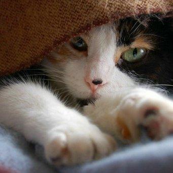 У кота опух десна