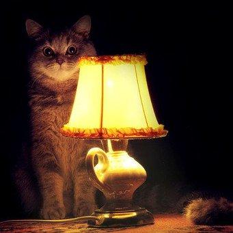 :Что коты делают ночью