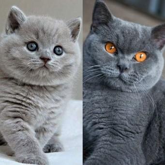 Цвет глаз меняется у котят