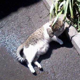грыжа у котёнка на животе фото