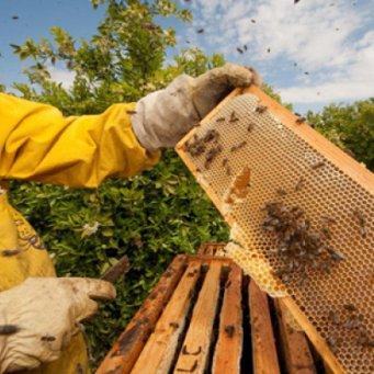 бизнес-план развитие пчеловодства: