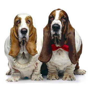 Стерилизация собак лапароскопическим методом - a