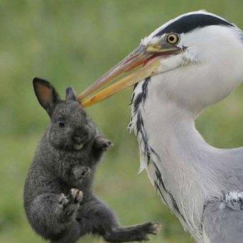 фото цапля птицы