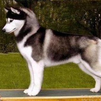 Активные породы собак - лучшие партнеры для детских игр