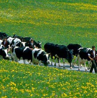 Земледелие и скотоводство: появление, разделение
