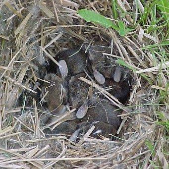 Гнездо для карелов своими руками фото 805