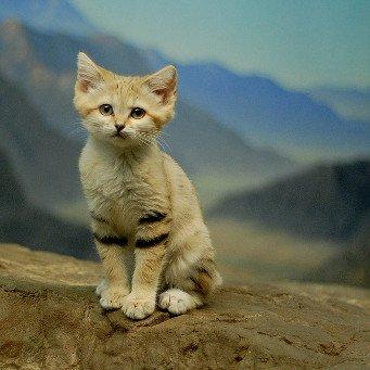 Распознать определить лишай у кошки