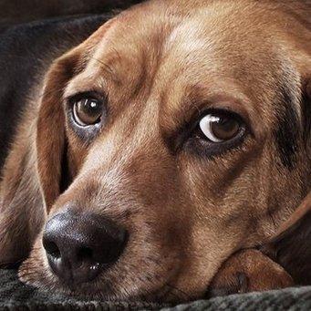 болезни лап собаки: