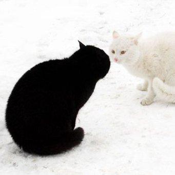 Галлюцинации у котов