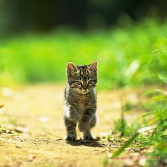 Клички для кошек – подобрать кличку для котят мальчиков и