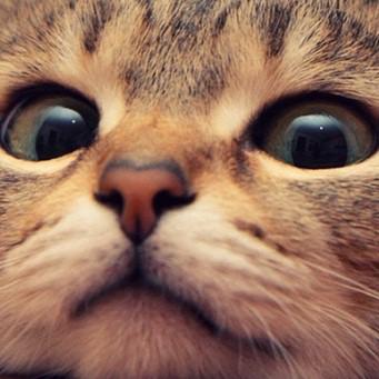 Если у кота холодный и мокрый нос