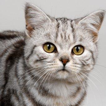 прикольные клички для кошек русские