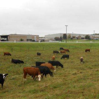 договор на выпас крупного рогатого скота образец