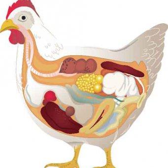 Жульен из курицы с грибами в духовке рецепт в тарталетках 67