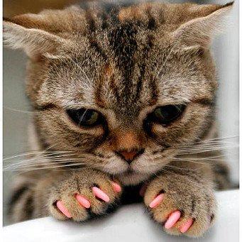 Когда котенку делать первые прививки и какие цена - 1e0
