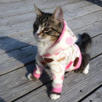 Одежда для кота как сделать