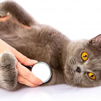 Если кот дрожит во сне