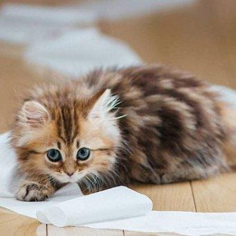 """Почему кошку тошнит? Опасные и """"неопасные"""" причины"""