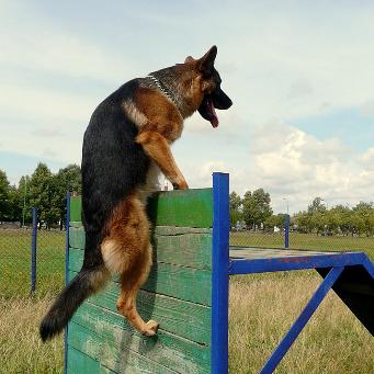 Виды дрессировки собак список всех