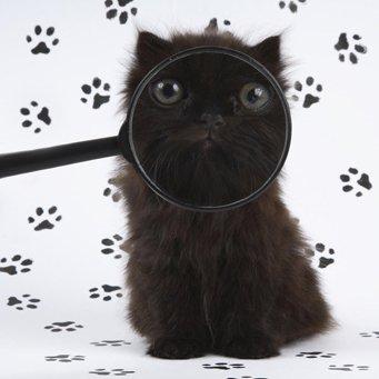 Почему у котёнка ломаются усы?