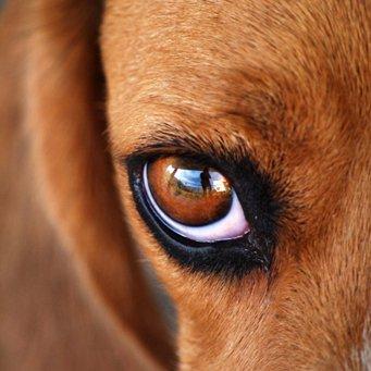 почему помутнел глаз у собаки