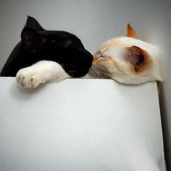 Правильно вязать кота